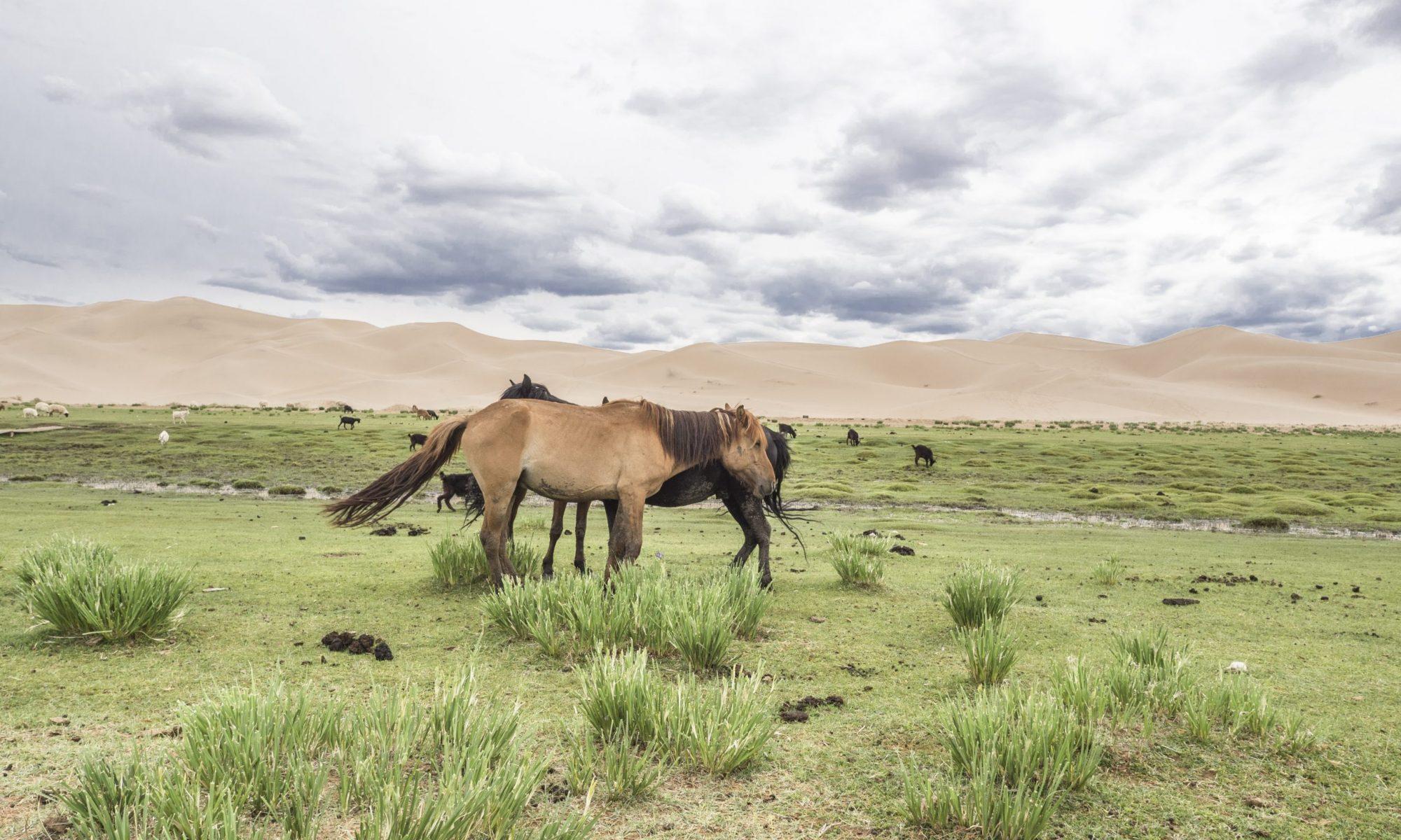 Pferdegrünland im Klimawandel